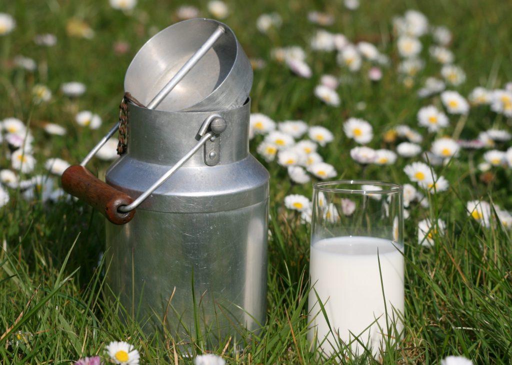 filières laitières bio