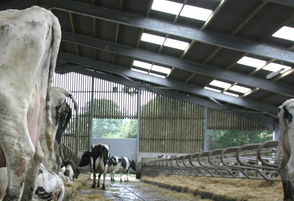 logettes vaches laitières