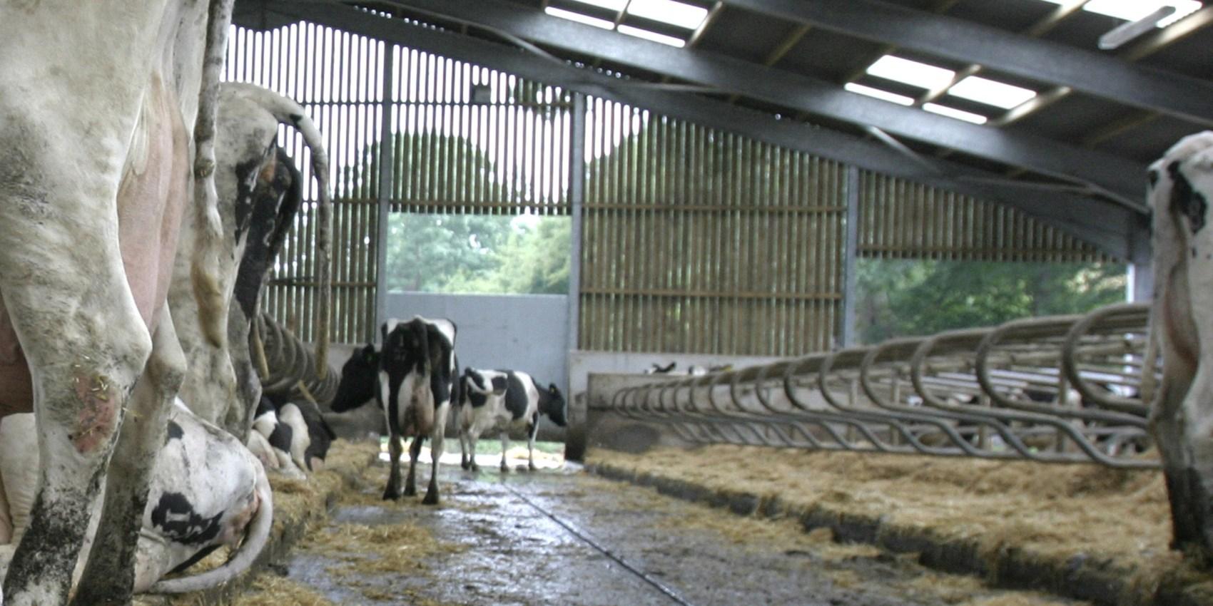 logettes-vaches-laitieres